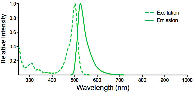 ATTO 488 Fluorophore Excitation and Emission Spectra