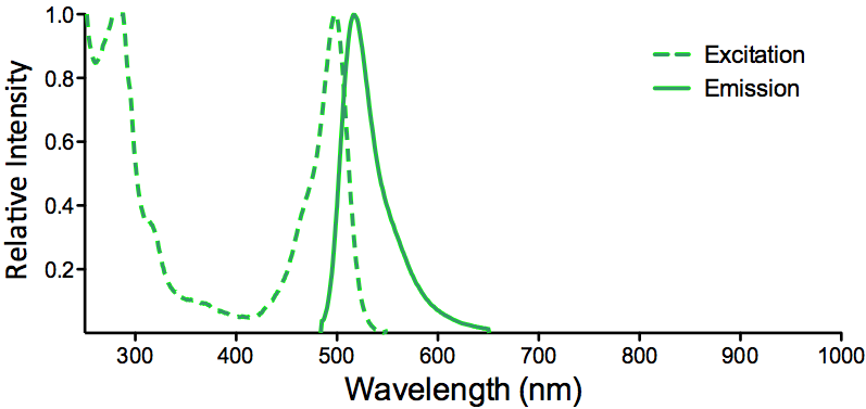 FITC Fluorescein Fluorophore Excitation and Emission Spectra