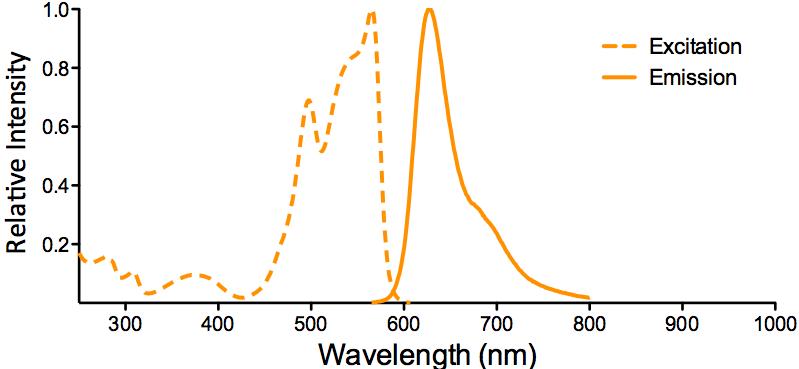 PE-ATTO 594 Fluorophore Conjugate Excitation and Emission Spectra
