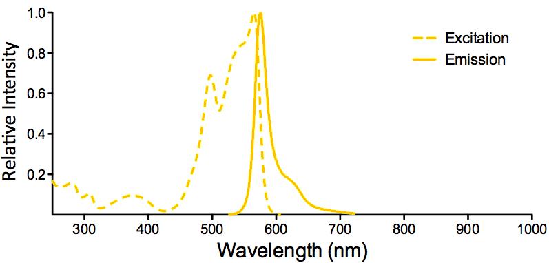 R-PE Fluorophore Excitation and Emission Spectra