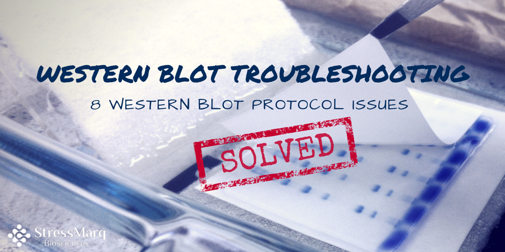 Western blot troubleshooting 8 Western blot protocol issues solved