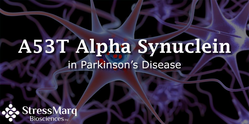 A53T Alpha Synuclein in Parkinson's Disease | StressMarq