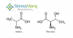 Alanine and Threonine have similar structures, but substituting Threonine for Alanine in alpha synuclein has significant effects.