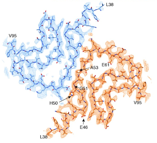 The Cryo-EM-determined structure of alpha synuclein shows most disease-causing mutations to be located at the interface between two protofilaments.