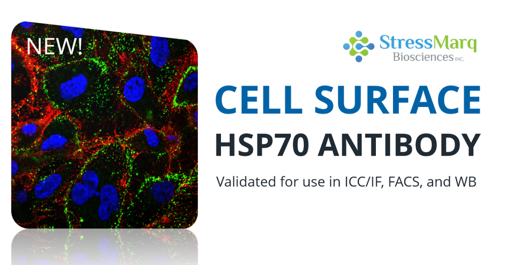 HSP70 antibody cell surface launch