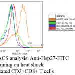 SMC-186_Hsp27-FITC_Antibody_5D12-A12_FACS_Mouse_Heat-Shocked-CD3-CD8-T-cells_1.png