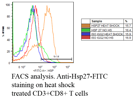 <p>Fluorescence Activated Cell Sorting analysis using Mouse Anti-Hsp27: FITC Monoclonal Antibody, Clone 5D12-A12 (SMC-186). Tissue: Heat Shocked CD3+ CD8+ T cells . Species: Mouse. Primary Antibody: Mouse Anti-Hsp27: FITC Monoclonal Antibody (SMC-186) at 1:1000. Courtesy of: Cheryl Cameron, Vaccine and Gene Therapy Instit. Florida.</p>