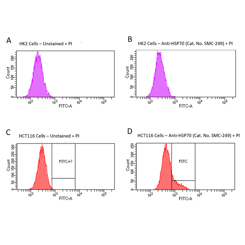 <p>Fluorescence-activated cell sorting analysis using Mouse Anti-HSP70 Monoclonal Antibody, Clone 1H11: FITC conjugate (SMC-249D-FITC). Tissue: HCT116 and HK2 cells. Species: Human. Primary Antibody: Mouse Anti-HSP70 Monoclonal Antibody (SMC-249) at 1:100 for 90 min at 4°C. Counterstain: Propidium Iodide nuclear stain. (A) HK2 cells unstained. (B) HK2 cells and HSP70 Antibody. (C) HCT116 cells unstained. (D) HCT116 cells and HSP70 Antibody. Shows that HSP70 Antibody binds to the cell surface of tumor cells but not non-tumor cells. Courtesy of: Lawrence Hightower, Charles Giardina, and Didem Ozcan from University of Connecticut.</p>