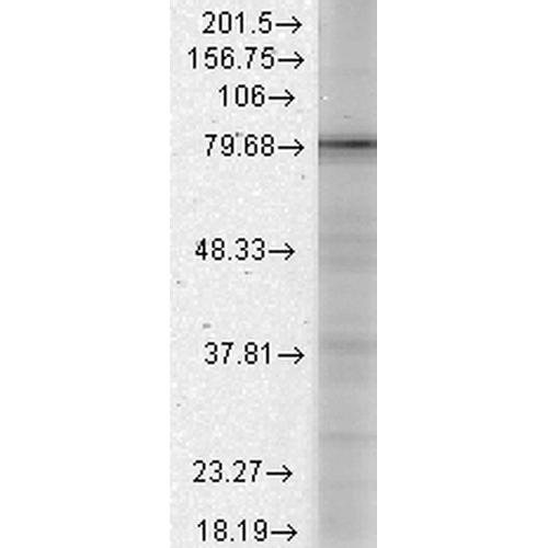 kalkulatorische buchhaltung